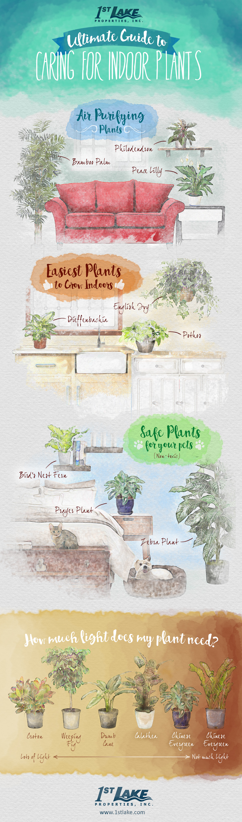 1st lake the ultimate guide to caring for indoor plants