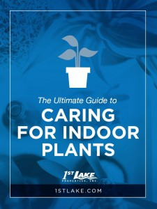Looking to add a little green in your life? We've got the ultimate guide to caring for indoor plants! Head to 1stlake.com to learn about the best types of indoor plants, plus tips for caring for them.